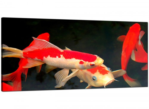 Red Living Room Wide Canvas of Koi Carp