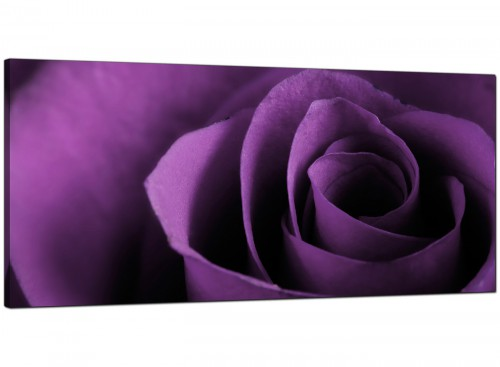 Purple Rose Petal Flower Floral Modern Canvas Art