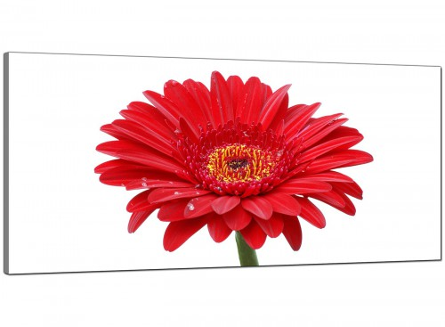 Red Living Room Large Canvas of Gerbera