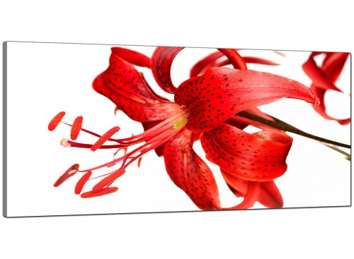 Red Living Room Extra Large Canvas of Tiger Lilly