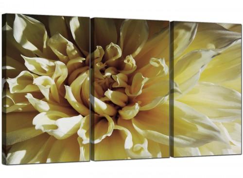 Cream Chrysanthemum Flower Floral Modern Canvas Art
