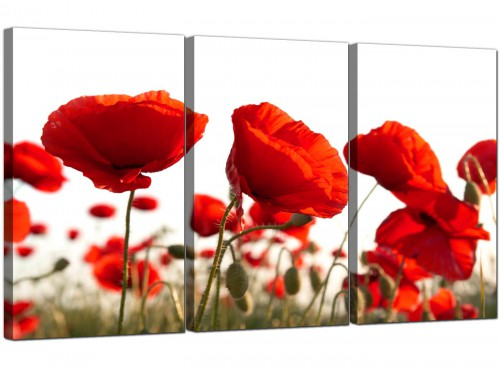 Red Poppy Field Poppies Flower White Floral Canvas