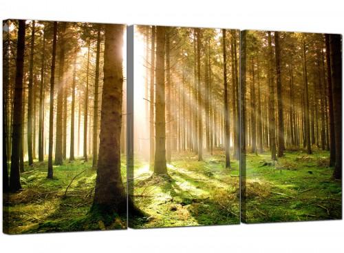 Set of 3 Landscape Canvas Art Woodland 3042