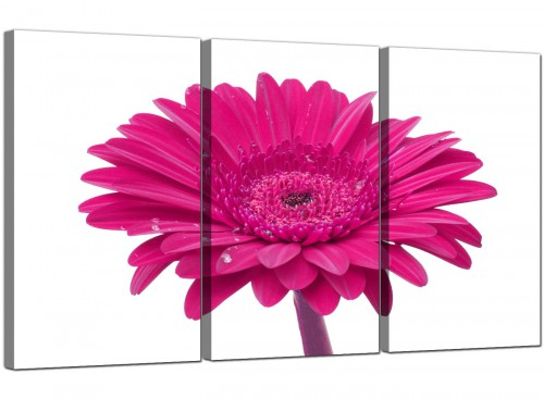 Pink White Gerbera Daisy Flower Floral Canvas