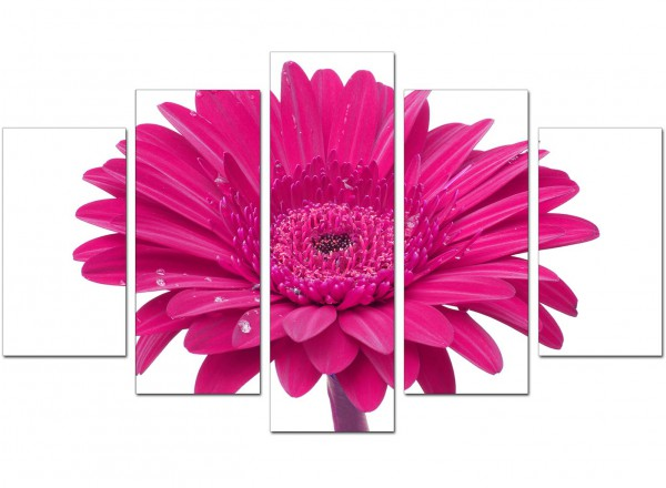 Extra large pink white gerbera daisy flower floral canvas 5 set 160cm 5099