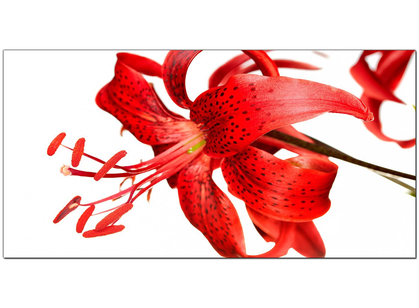 Large red canvas prints of a tiger lily flower overall size 120cm x 50cm izmirmasajfo