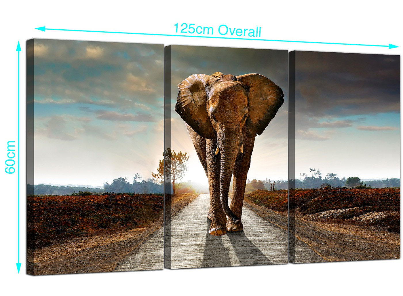 Large African Elephant Canvas Prints 3 Part For Your Hallway