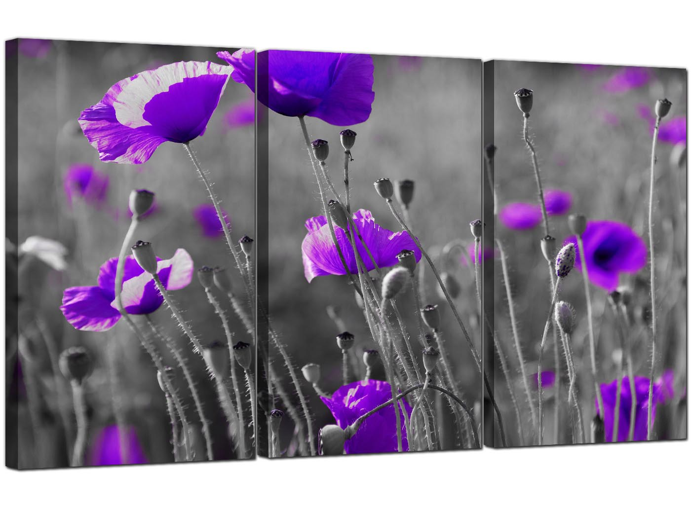 purple poppy canvas pictures 3 panel for your dining room