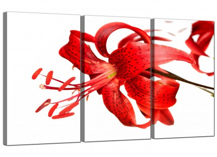 Modern Red Tiger Lily Flower on White Floral Canvas - 3 Part - 125cm - 3052