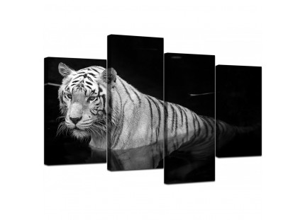 Modern Black White Bengal Tiger Water Canvas