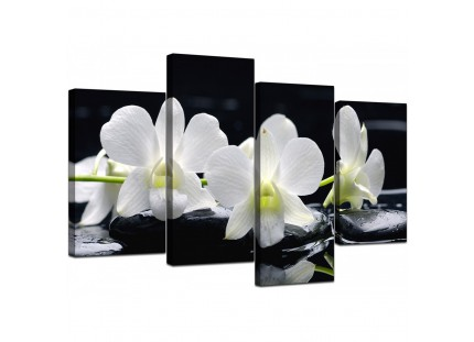 Black and White Orchid Flower Floral Canvas