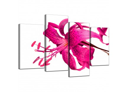Pink Tiger Lily Flower on White Floral Canvas