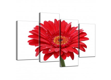 Red White Gerbera Daisy Flower Floral Canvas