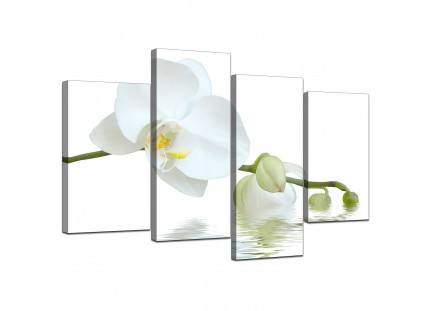 Modern White Orchid Flower Fresh Floral Canvas