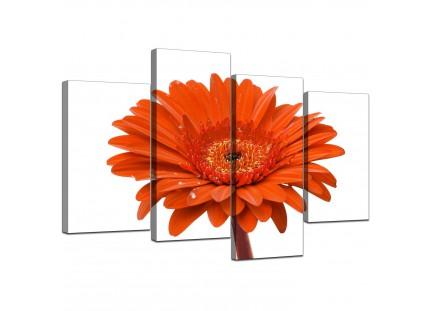 Orange White Gerbera Daisy Flower Floral Canvas