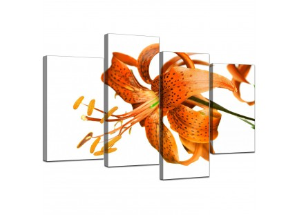 Orange White Tiger Lily Flower Floral Canvas