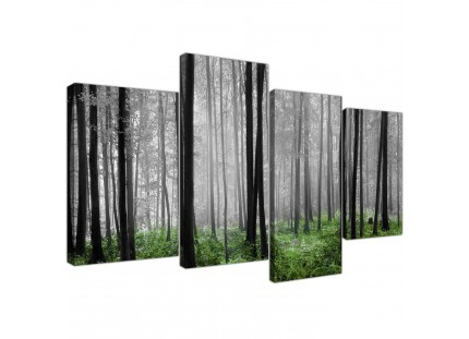 Black White Green Grey Forest Woodland Trees