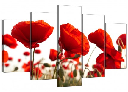 Red Poppy Field Poppies Flower White Floral XL Canvas - 5 Panel - 160cm - 5056