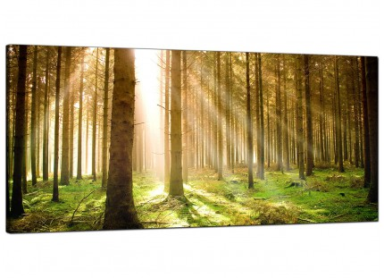 Large Green Forest Woodland Sunlight Trees Modern Canvas Art - 120cm - 1042