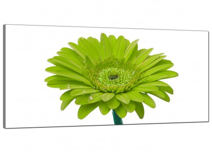 Large Lime Green White Gerbera Daisy Flower Floral Canvas Wallart - 120cm - 1098