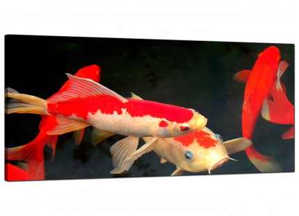 Large Japanese Koi Carp Fish Pond Modern Canvas Art - 120cm - 1094