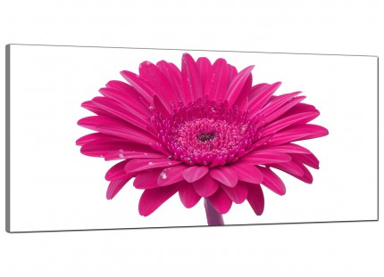 Large Pink White Gerbera Daisy Flower Floral Modern Canvas Art - 120cm - 1099