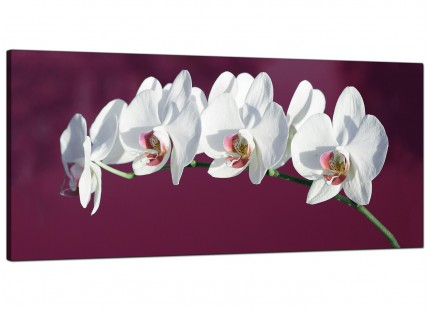 Large Plum White Coloured Orchid Flower Floral Modern Canvas Art - 120cm - 1116