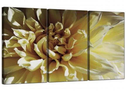 Modern Cream Chrysanthemum Flower Floral Canvas - Set of 3 - 125cm - 3104