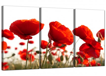 Modern Red Poppy Field Poppies Flower White Floral Canvas - 3 Set - 125cm - 3056