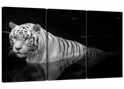 Modern Black White Bengal Tiger Water Canvas - 3 Panel - 125cm - 3020