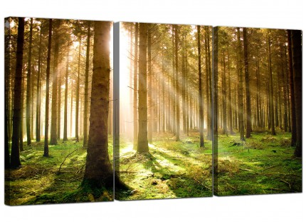 Modern Green Forest Woodland Sunlight Trees Canvas - Set of 3 - 125cm - 3042