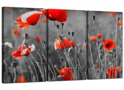 Modern Red Poppy Black White Flower Poppies Floral Canvas - 3 Set - 125cm - 3135